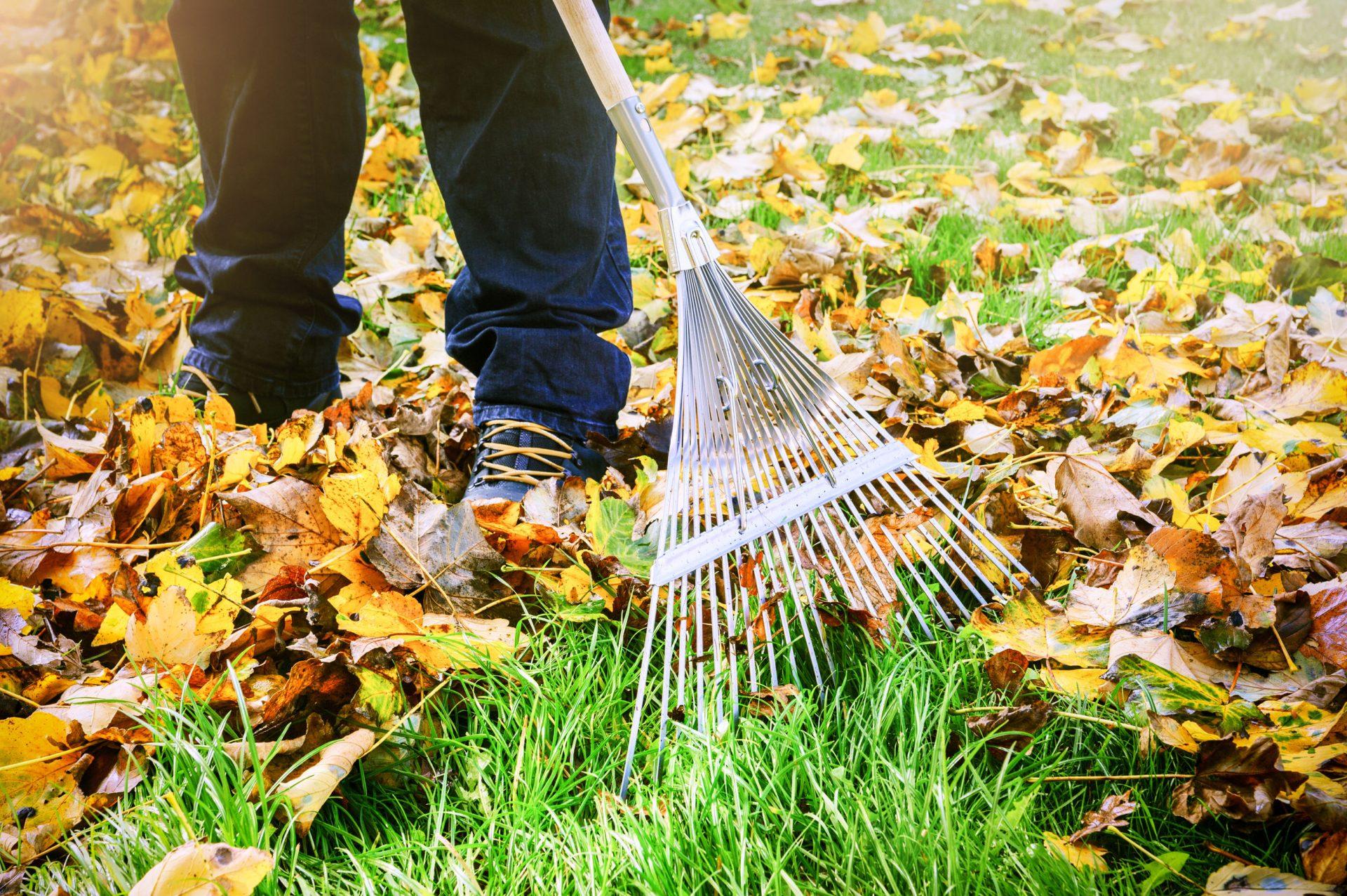 Laat uw tuin verzorgen door onze tuiniers. Huur een student!